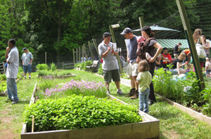 Image Result For How To Start A Sustainable Garden