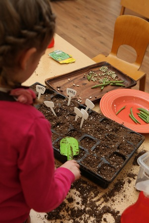 Student planting seeds
